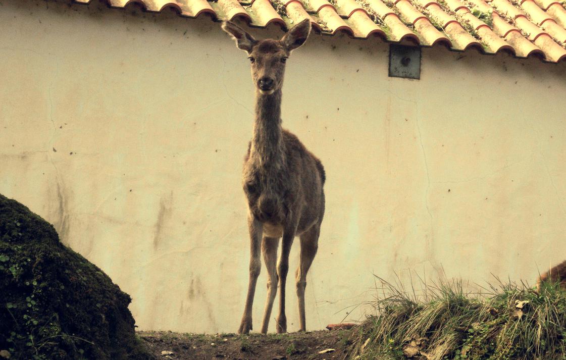Deer by RsNemesis