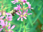 Bee by Fwee4