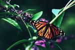 Butterfly Wings by Fwee4