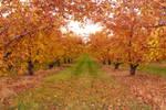 Autumn Orchard Stock 15