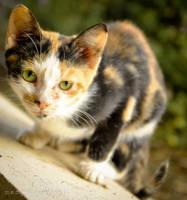 kitty by rottensky