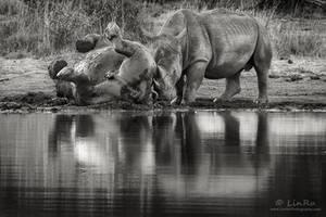 Rhino Mud Bath by RudiVanDenHeever