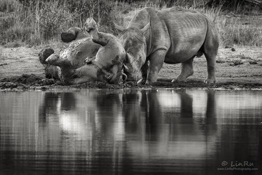 Rhino Mud Bath