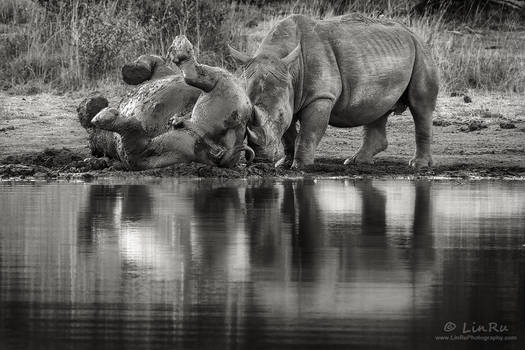 Rhino Mud Bath