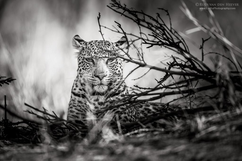Hidden by LinRuPhotography