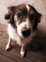 Dog by TT1983