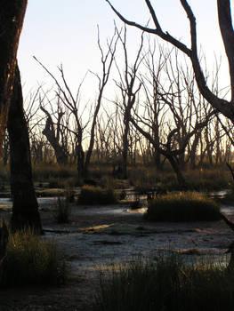Mokoan Swamp 02