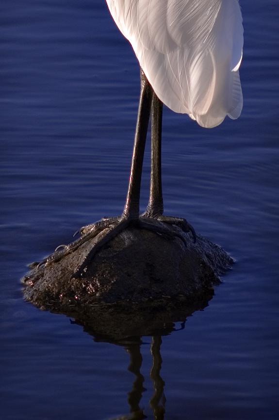 Bird Legs by BobContrast