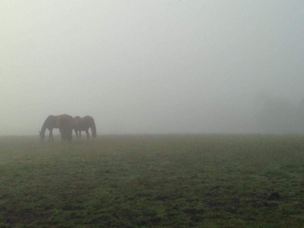 Misty Morn by Partner-in-crime