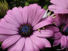 pink 435 by Halla51