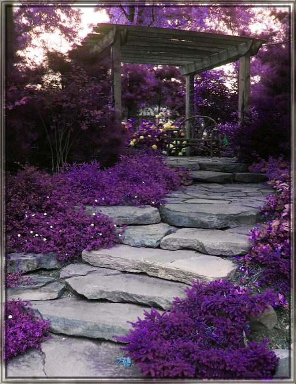 Purple Garden by phudak78