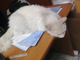 Un gato en la oficina by manekofansub