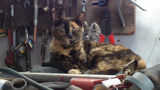 Una gata mecanica