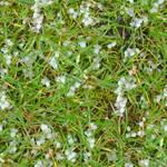 Hail on Grass Seamless Texture