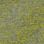 Moss on Concrete Texture