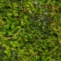 Moss Seamless Texture by Vanity-Arts