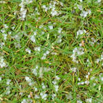 Hail on Grass 2