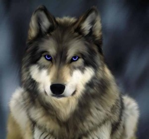 Blackwolf996's Profile Picture