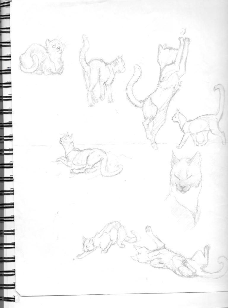 Cat Sketch Dump by Sydnut