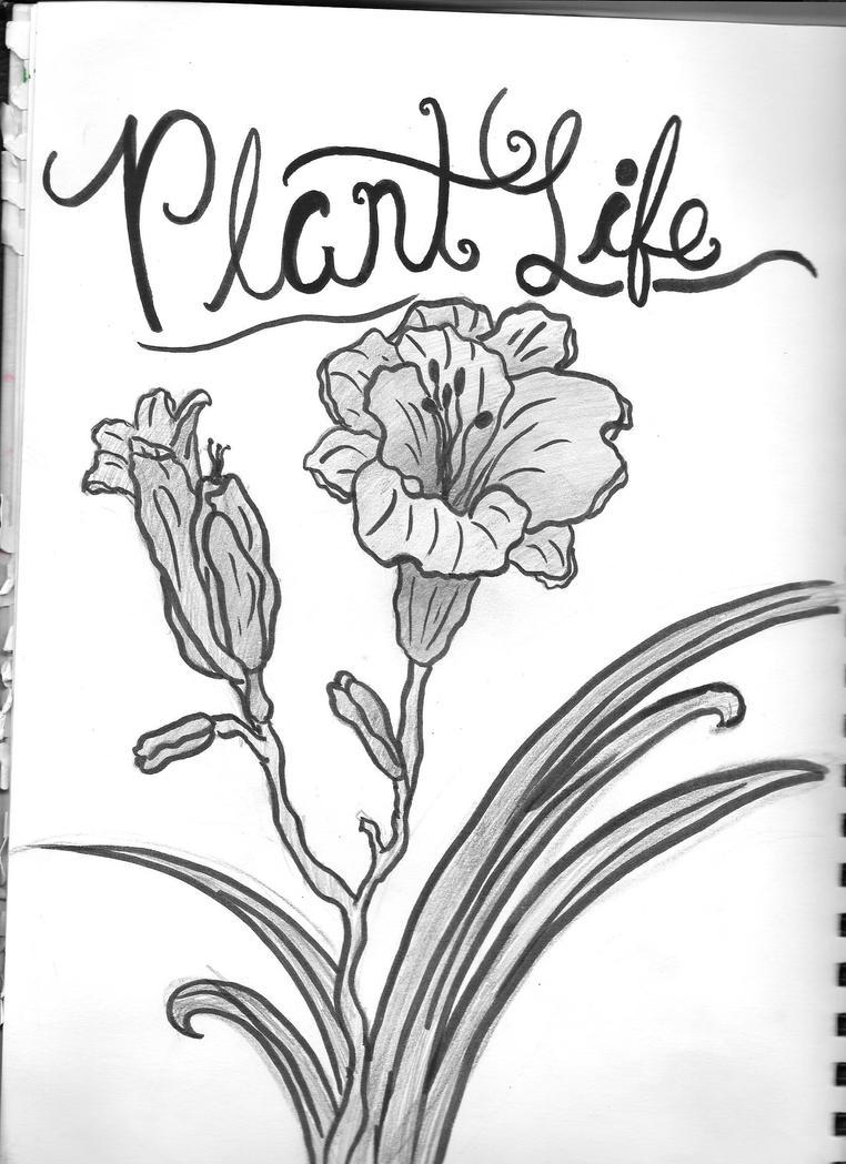 Plant Life by Sydnut