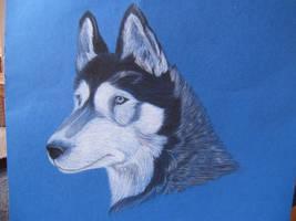 Siberian husky -better shot
