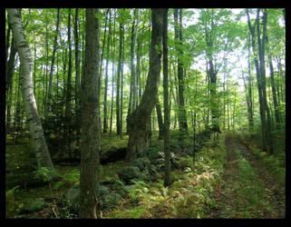 Path by gwystal