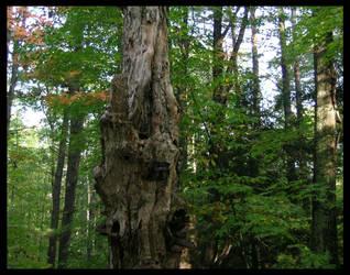 old tree by gwystal