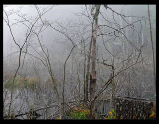 Swamp by gwystal