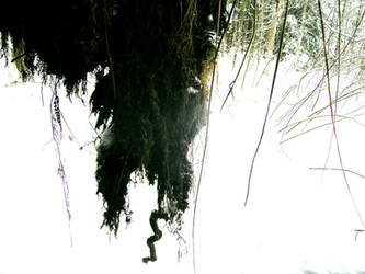 hanging roots by gwystal