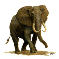 Elephant by Nordheimer