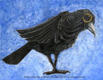 Morlen the Bespectacled Crow