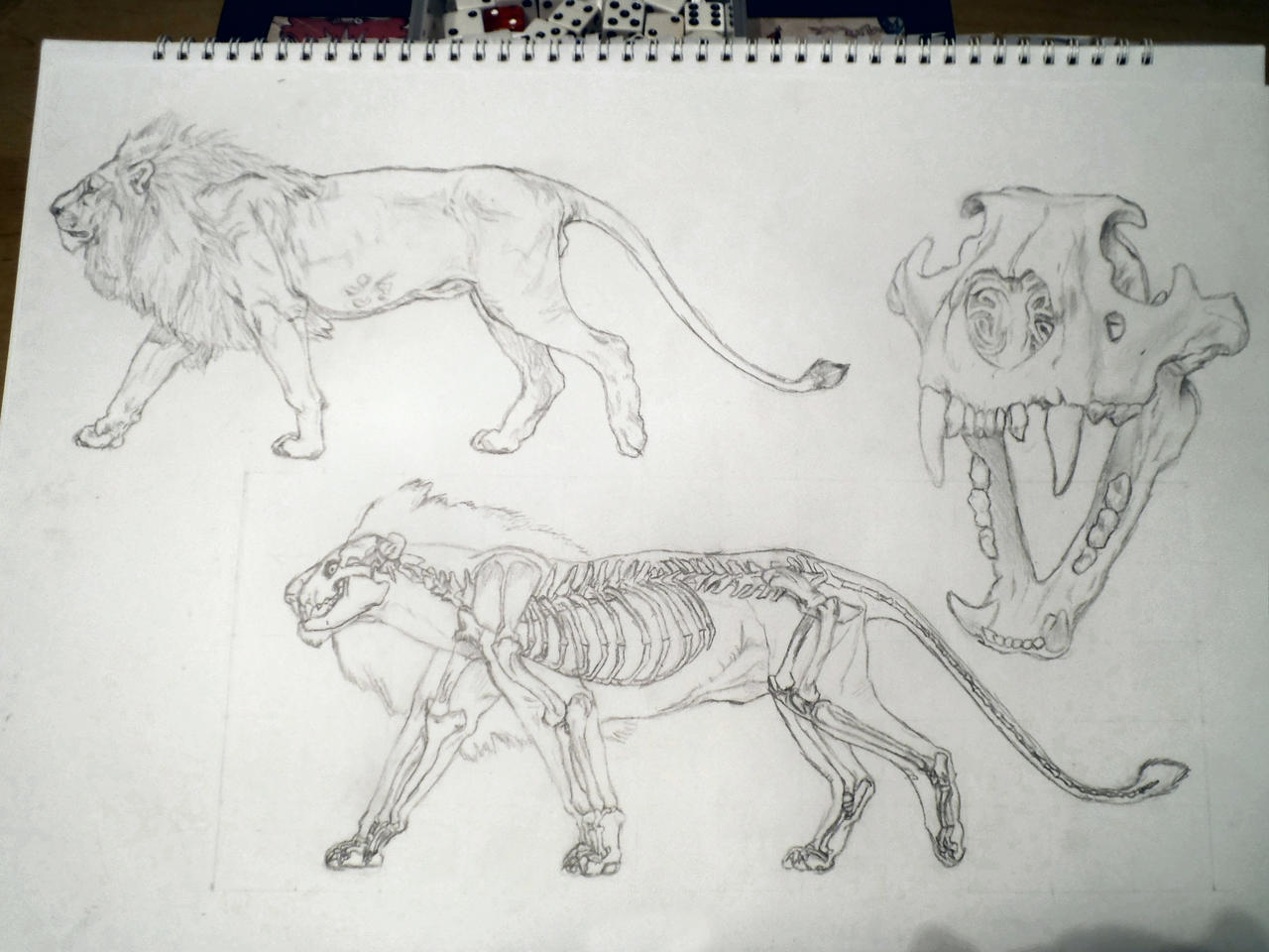 Lion Anatomy By Paragonofawesomeness On Deviantart