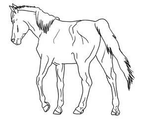 Arabian/Pony Walking Away Lines PUBLIC DOMAIN by Allicorn