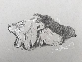 Lion by tadamson