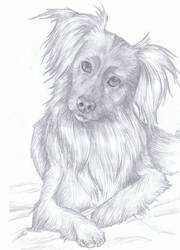 dog drawing by RainyApplePie