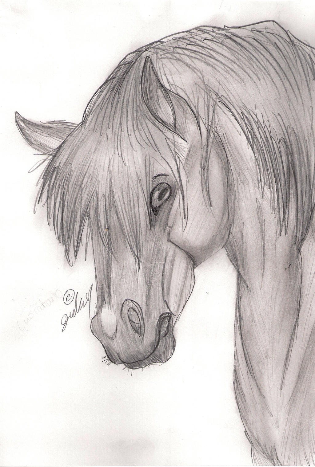 semi realistic horse sketch by jedauw digital art drawings paintings    Realistic Horse Drawings