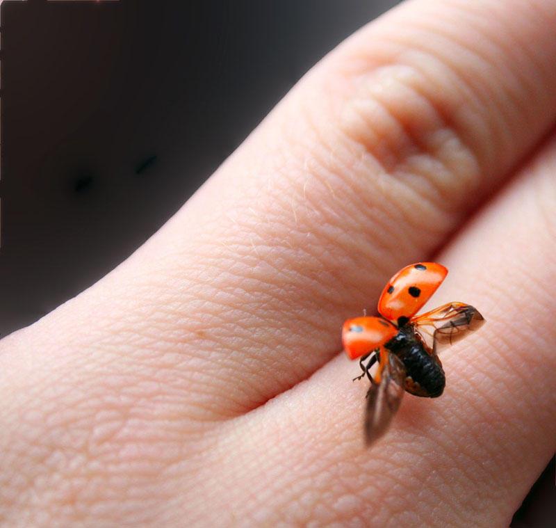 Ladybug by muppi - u�ur b�cekli avatarlar
