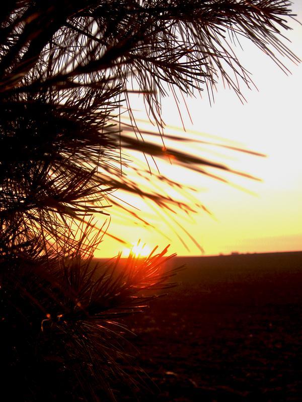 Pine Tree Sunrise by AmeZaRain