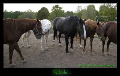 Nibble..... by VKahri