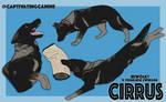 Cirrus - IGP Titles