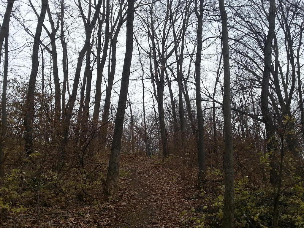 path by Loveistheknife