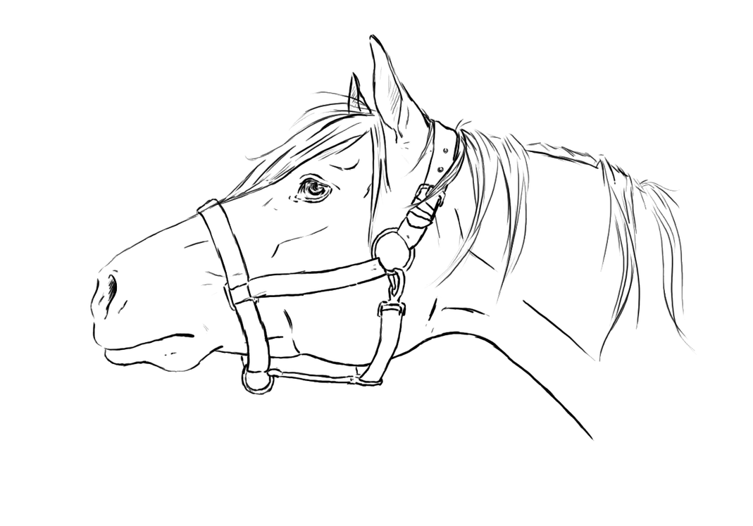 Line Drawings From D Models : Horse head lineart by tnienjaa on deviantart
