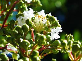 Summer Bloom by Spiritomb1231