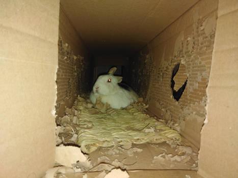 Impala in a cardboard box