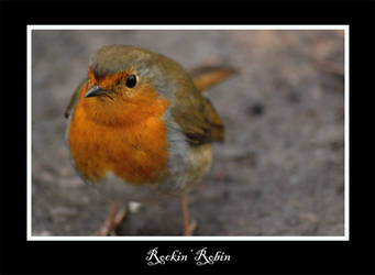 Robin by spunge-mad