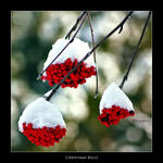 Christmas Bells by Marcello-Paoli