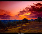 Olive Sunset by Marcello-Paoli