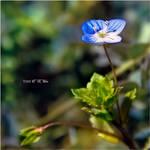 Tiny by Marcello-Paoli
