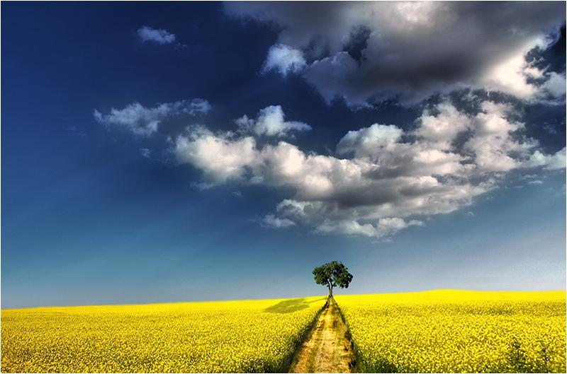 Fields of Dreams .. by Marcello-Paoli