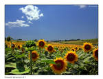 Summer Memories_3 by Marcello-Paoli